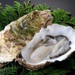 【相葉マナブ】広島県のご当地まん「かきグラまん」の作り方。牡蠣の旨味広がる絶品中華まんレシピ(12月1日放送)
